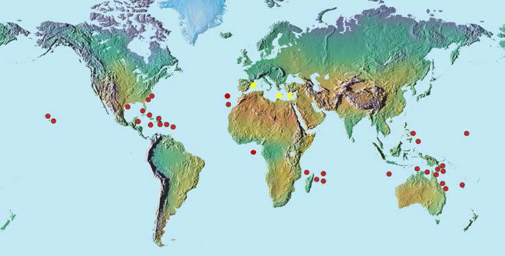 Distribución Gambierdiscus